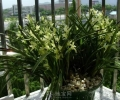 南昌花卉,盆栽租摆,绿植租摆,植物批发
